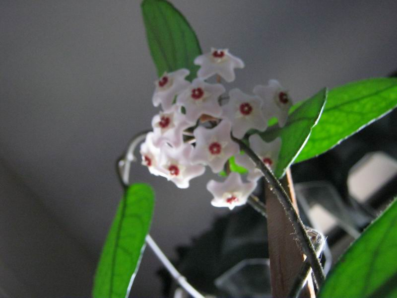 La Hoya Plant July 26, 2011
