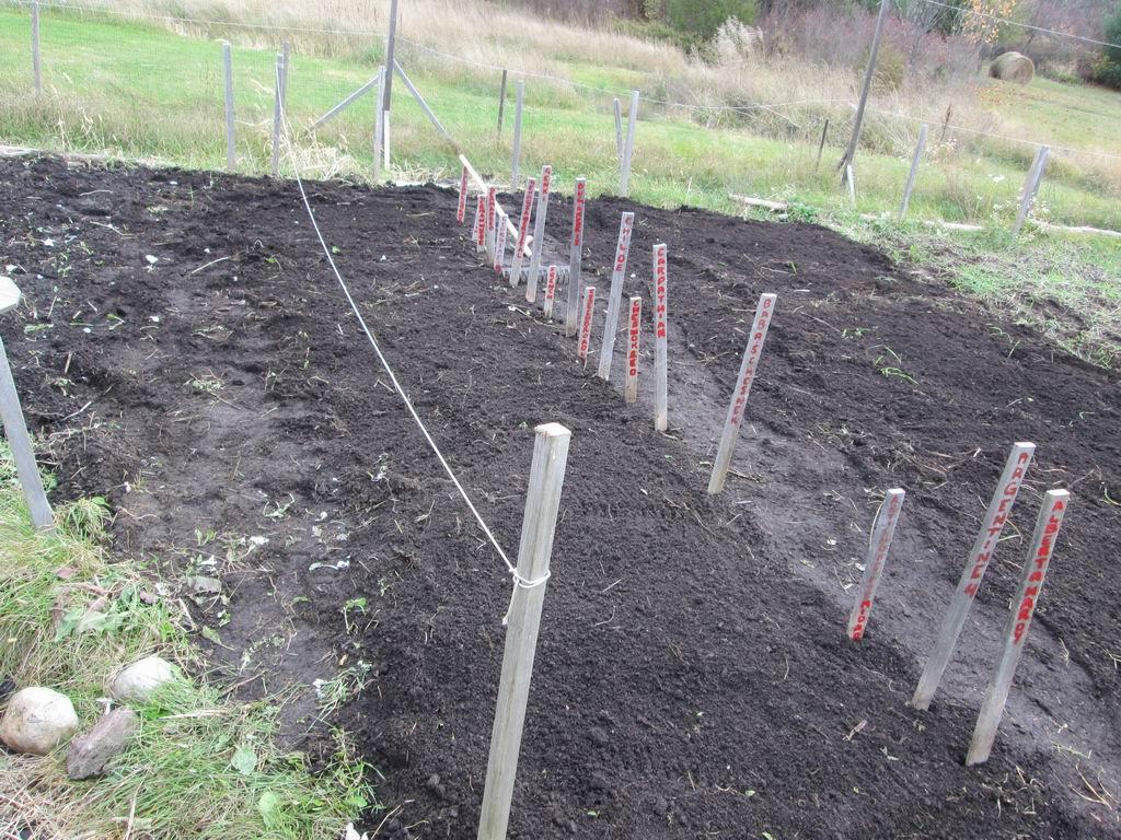 20131019b-03-garlicplanting
