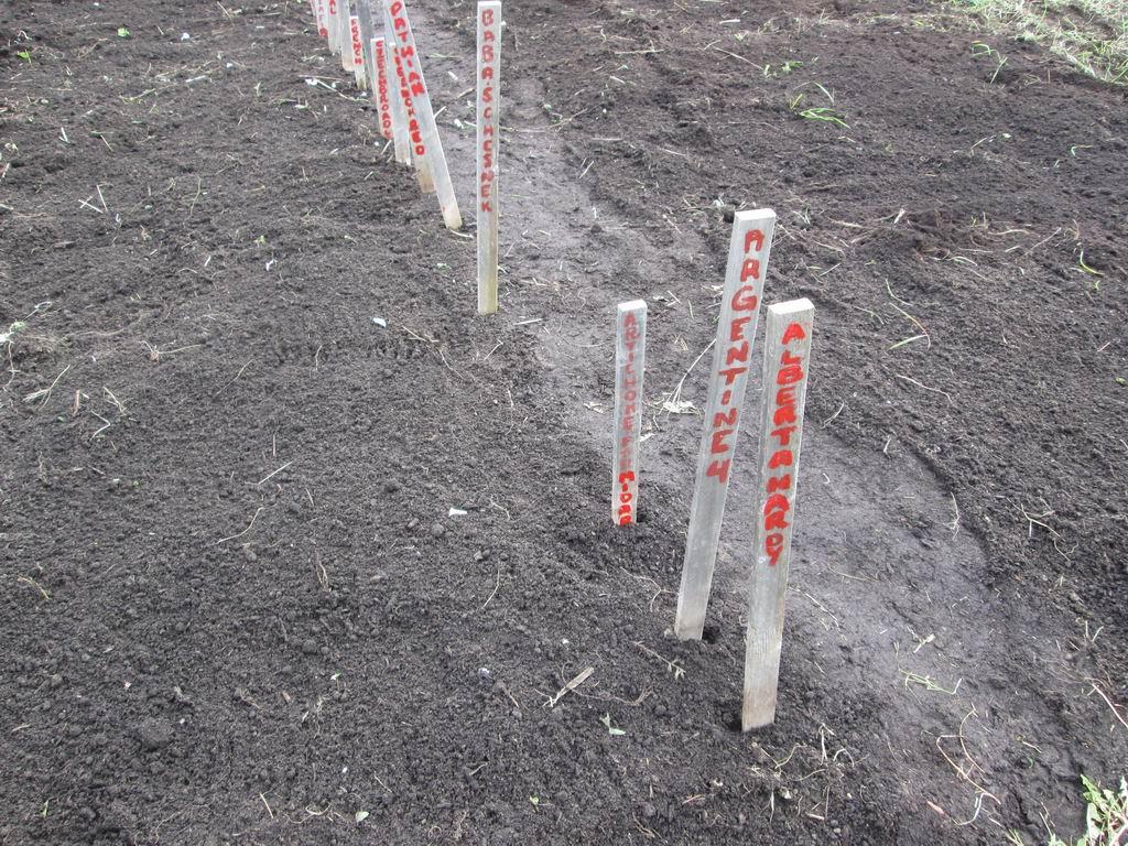 20131019b-10-garlic planting