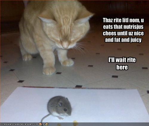 funny-pictures-cat-waits-for-mouse-to-get-fat