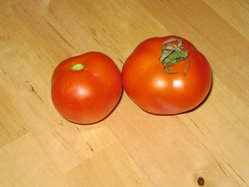 Eros Tomato (Red) first tomatoe of 2011