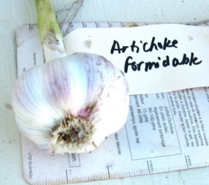20070804-20-artichoke-formidable-garlic
