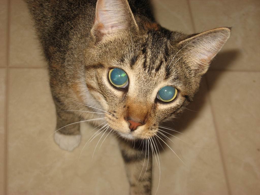 20120323-03-cat-dora