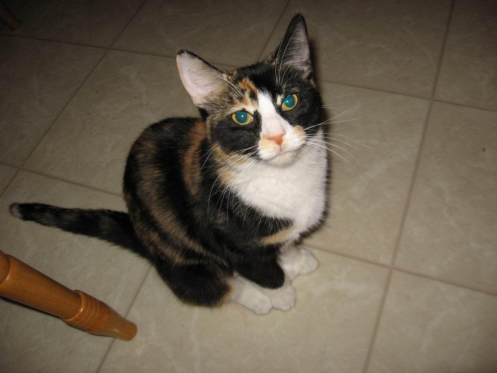 20120323-07-cat-payton